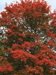 fall-foliage-at-saneteachers